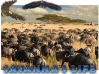 Savanna's Life Spielautomat