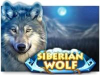 Siberian Wolf Spielautomat