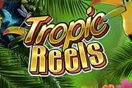 Tropic Reels Spielautomat